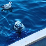seal and birds